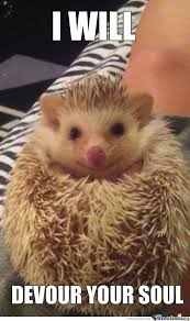 Cute hedgehog memes - Curious Creatures Rescue | Facebook
