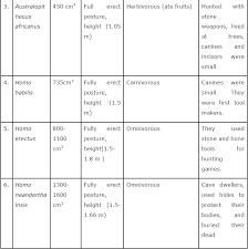 Human Evolution Chart Species Ncert Solutions Class 12 Biology Chapter 7 Evolution