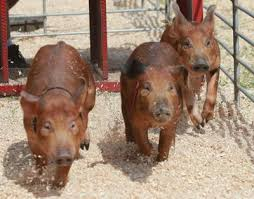 Indianas Oldest County Fair Opens Today Laporte