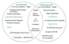 Prokaryotes Vs Eukaryotes Venn Diagram Worksheet Prokaryotic And Eukaryotic Cells Venn Diagram Microb Biology