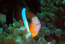 Finding Nemo Light Fish Finding Nemos Cousins Meet The Little Fish That Can See Uv