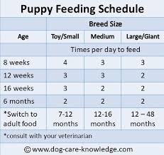 Simple Puppy Feeding Schedule You Absolutely Need Puppy