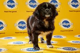 puppy bowl 2015 halftime. Interesting Bowl Puppy Bowl XII Throughout 2015 Halftime T