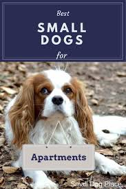 apartment living for dogs. best small dogs for apartments. people who live in smaller es apartment living n