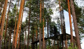 Coolest Tree House Goes To    Coolest Tree Houses