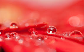Red Flower Wallpaper Red Flowers Wallpaper Hd 6807786