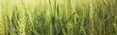 météo agricole à 8 jours