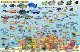 Belize Maps Dive Fish Id Cards
