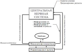 Общие принципы и механизмы адаптации организма человека к условиям  Общая схема функциональной системы