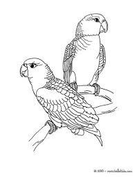 perroquet 1 01 m9j_rj7 parrot picture coloring pages hellokids com on parrot outline template
