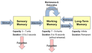 Long Term Memory Chart Dataworks The Information Processing Model Ipm