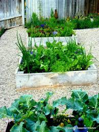 beginners vegetables garden easy beginner vegetable growing large size fall image of gardening guide ideas book