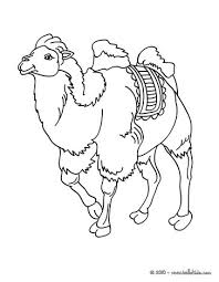 Small Picture Camel Coloring pages Drawing for Kids Reading Learning Free
