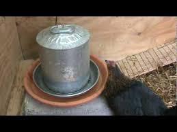 Chicken Ken (heated water supply) - YouTube