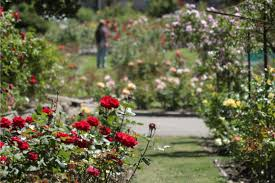 mor rose garden oakland ca