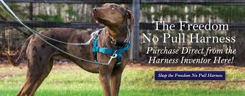 2 Hounds Harness Size Chart Freedom No Pull Harness