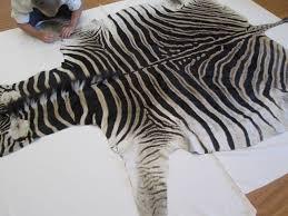zebra hide zebra skin cleaning and repair in los angeles