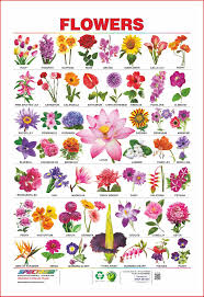 Buy Spectrum Educational Large Wall Charts Set Of 5