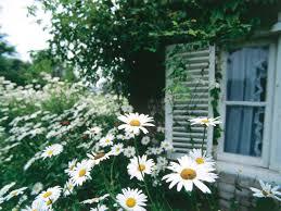 Cottage Garden Designs  ExprimartdesigncomRomantic Cottage Gardens