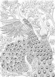 Peacock Coloring Pages Great Peacock Coloring Pages For Adults