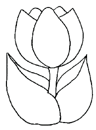 easy coloring pages to draw drawn tulip book simple drawing of peony page kids play free printable for s
