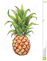 pineapple drawing. royalty-free illustration pineapple drawing