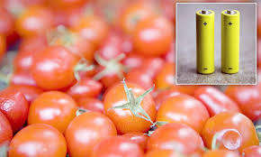 How Would A Tomato Look Under Blue Light Scientists Develop Battery Cells That Use Waste Fruit To
