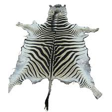 zebra skins equus burchelli no felt backing