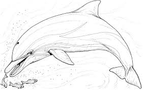 Small Picture Dolphins Fancy Coloring Pages Of Dolphins Printable Coloring