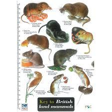 Field Guide British Mammals