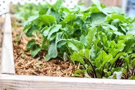 best soil for vegetable garden. best soil for vegetable garden