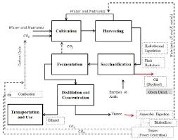 Ethanol Production Process Flow Chart Bioethanol From Microalgal Biomass A Promising Approach In