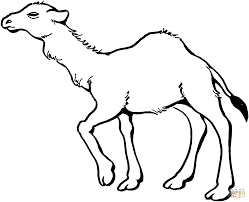 camel 4 coloring page camels coloring pages free coloring pages on camel coloring pictures