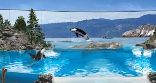 seaworld releases details on what the future of their remaining orcas will look like blogs
