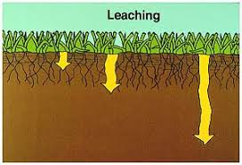 Image result for LEACHING