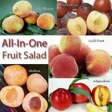 Fruit Trees U0026 Plants  Edible Garden  The Home DepotFruit Salad Trees Usa