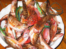 """Résultat de recherche d'images pour """"pêche poisson"""""""