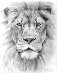 easy lion drawings in pencil. Plain Drawings Easy Pencil Drawings Of Lions Lion Pencil Drawing  Patty With In E