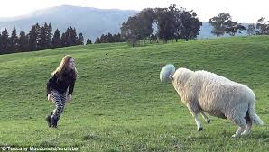 ms macdonald prepares for a line out as bruce to sheep punts the ball straight down