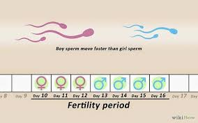 How To Conceive A Baby Boy Pregnant With A Girl