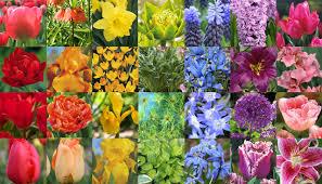 color garden. Create A Monochromatic Garden Color W