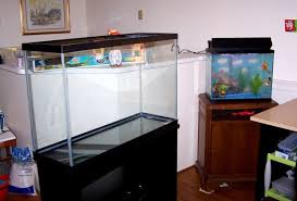 find quality aquarium furniture. Your First Goldfish Tank: Which Is The Better Option? Find Quality Aquarium Furniture