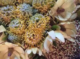 Wayne Stubbs Flowers