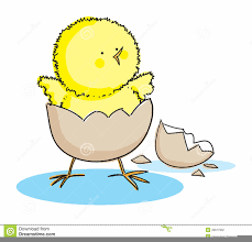 chicken hatching clipart. Simple Hatching Download This Image As Inside Chicken Hatching Clipart A