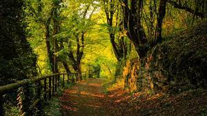 Forest Path Wallpapers - Top Free ...