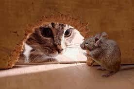 Картинки по запросу Как поймать мышь