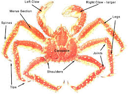 King Crab Leg Size Chart Buying Cooking And Serving King Crab Legs Fishex Seafoods
