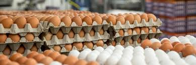How To Increase Egg Production Of Your Poultry