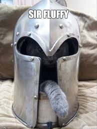 cats of the round table sir fluffy image tagged in cats knights