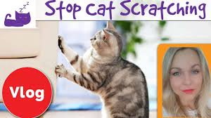 🐈 How to stop your cat from scratching your furniture 🐱 3 tips